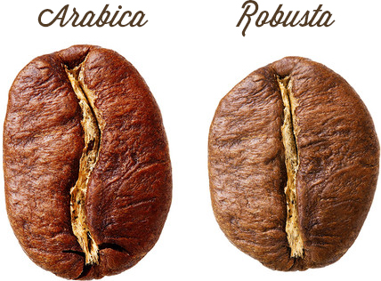 Arabica & Robusta Coffee Beans